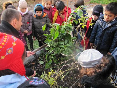 Ricominciamo a coltivare nelle scuole 70