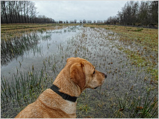 "Walking with ""YIP"" in the wetlands"