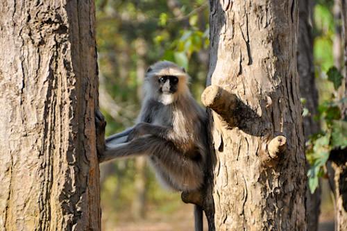 Langur Khana National Park