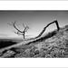 Twisted Tree by Ian Bramham
