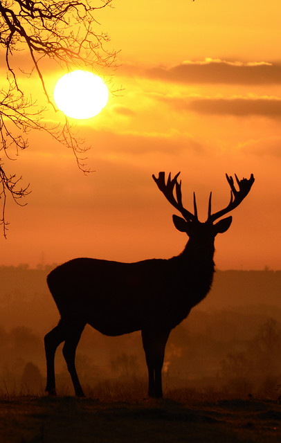 Red Deer Sunrise by Rob '81