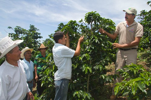 "Members of the specialty coffee cooperative ""Los Maronchos"" work in the field at the coffee farm located in Las Vegas, Santa Bárbara, Honduras. Coffees grown by farmers who are members of this cooperative won Honduras' 2011 Cup of Excellence and had received assistance through USDA's Food for Progress Program. Photo credit: TechnoServe"
