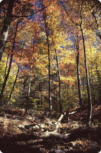autumn trees fall nature colors forest woods shadows hiking pennsylvania foliage trail carboncounty kodakkodachrome40 kpa5070 typeafilm
