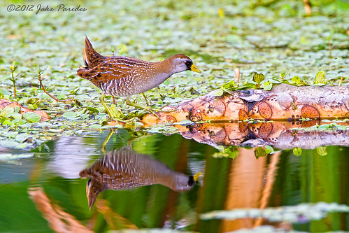 Sora Rail reflection