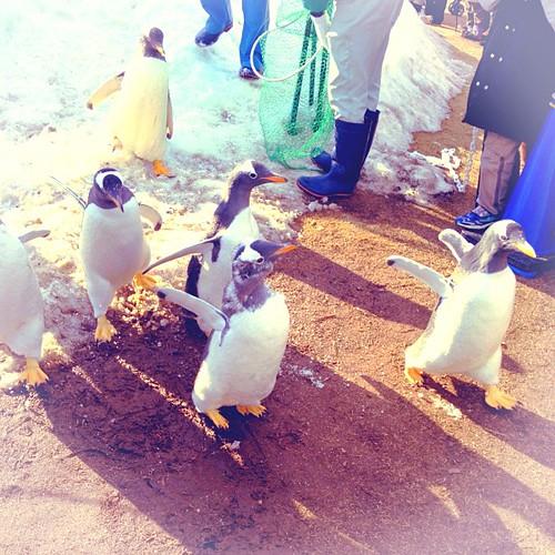 ペンギンダッシュ!