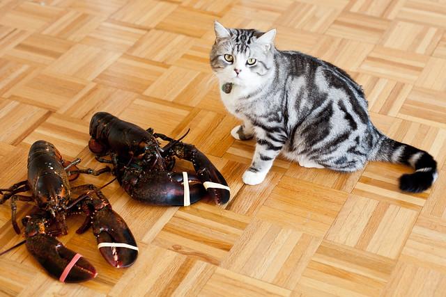 Cat Meets Lobster