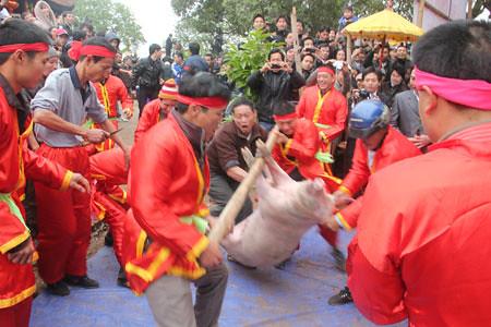 6794338101 b4c32388cc Lễ hội Chạy lợn ở Hà Nội Nóng bừng 3 phút mổ lợn khao quân