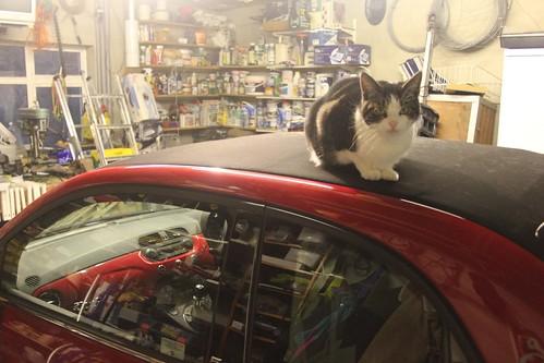 Day 31 - A Cat Hammock