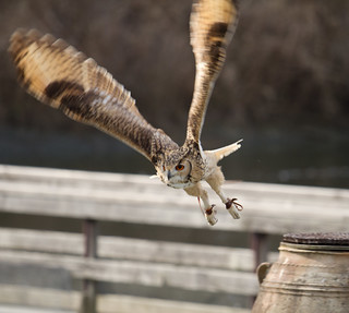 Photo:Tenka in flight By:Takashi(aes256)