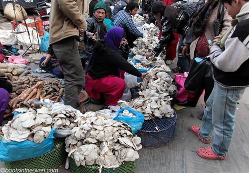 Oyster Mushrooms... lots of them