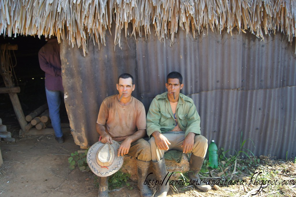 Faces of Vinales. In tobacco fields