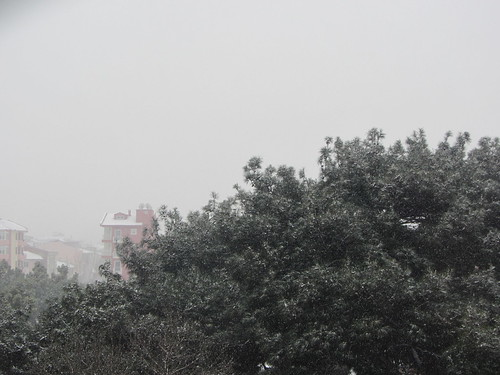Winderwonderland Balikesir: snow on trees