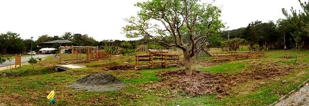 工事中ではなくて、リュウキュウイノシシがエサを探して芝生を全部掘り起こしてしまったのだそう(!)すごいね~