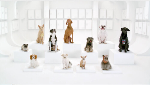 The Barkside Volkswagen Super Bowl Commercial