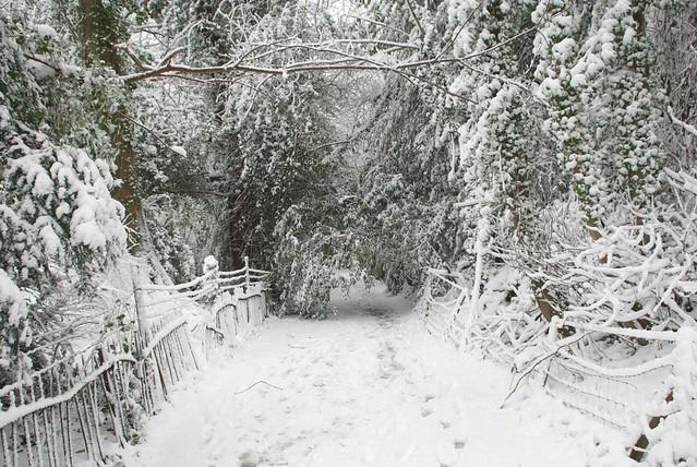 snow in rye DSC_3271_1