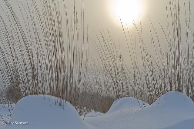 Winter Sun / Soleil d'hiver