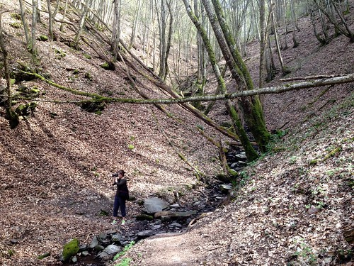 Hiking from Manderscheid to Wittlich