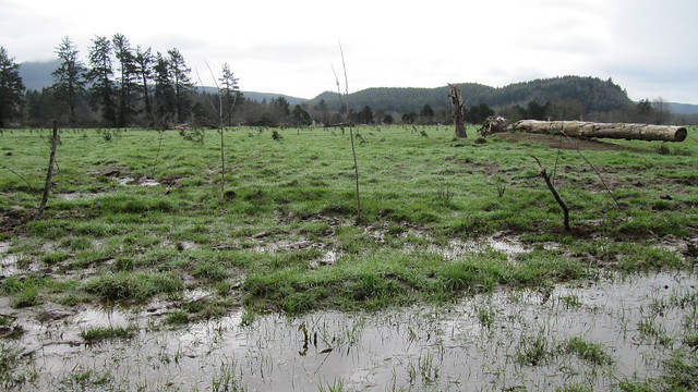 WetlandHwy101pasture