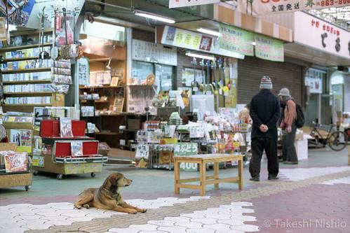 看板犬 / mascot dog