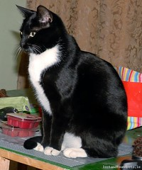 Thu, Apr 17th, 2014 Lost Female Cat - The Local Area, Dunleer, Louth