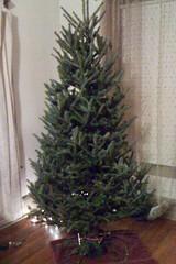 Tree 2011 Phase 1