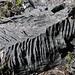 Piedra formado por la lluvia - Naturally sculpted limestone; al sur de Tlaxiaco, Oaxaca, Mexico por Lon&Queta