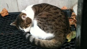 Лари спи под калорифера през работно време