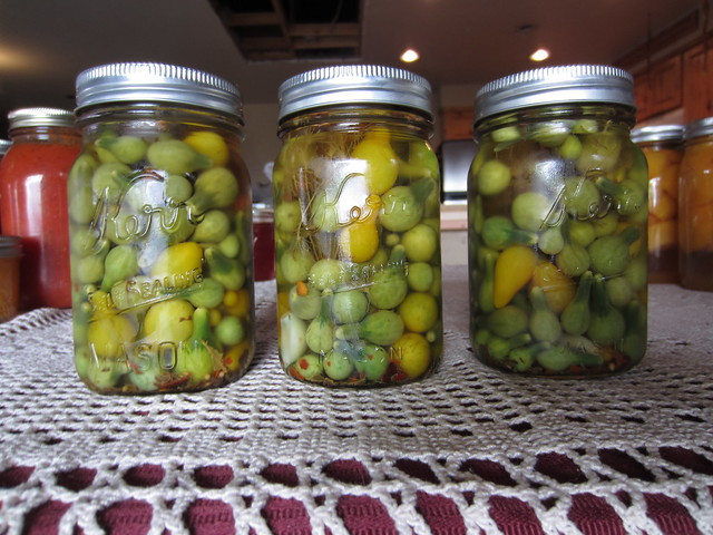 Thanksgiving's Pickled Green Tomatoes