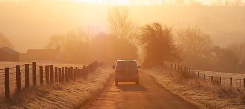 autumn trees mist sunrise fence fan lane redlights