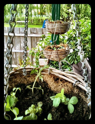 Hanging baskets - the contents