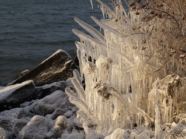 icicles on branches by the lake
