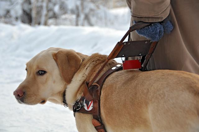 Tsa Dog Adoption Video Ashton Kutcher