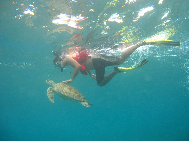swimming with turtles caribbean sea belize