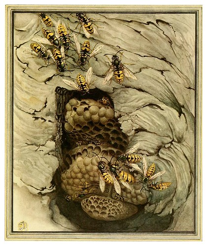 031-La avispa comun- Fabre's book of insects ..1921-Ilustrado por Edward Detmold