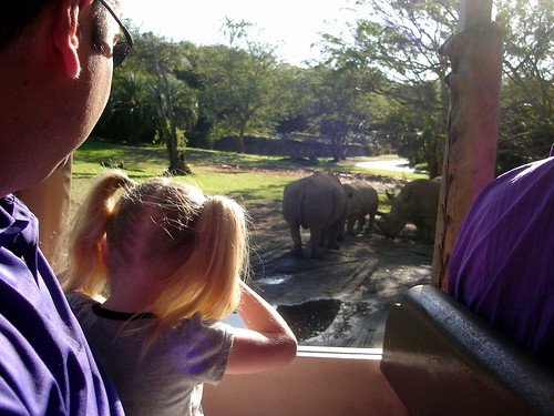With Rhinos