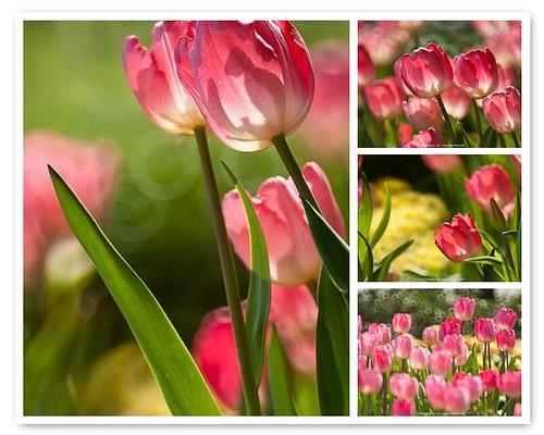 Flora show
