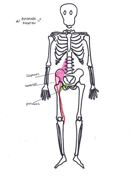 hip external rotation anterior