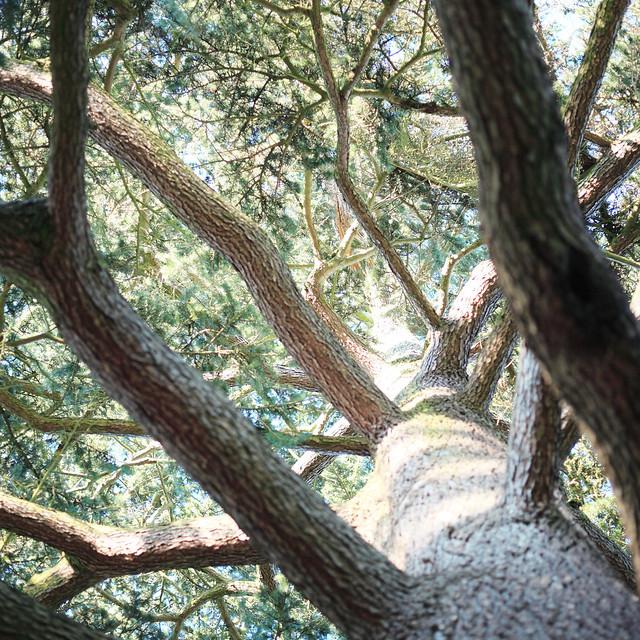 透光の樹.