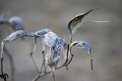 winter flowers 054