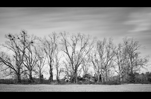 old trees dirt nd pecan countryroad
