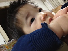 指をくわえるとらちゃん(2012/1/13)