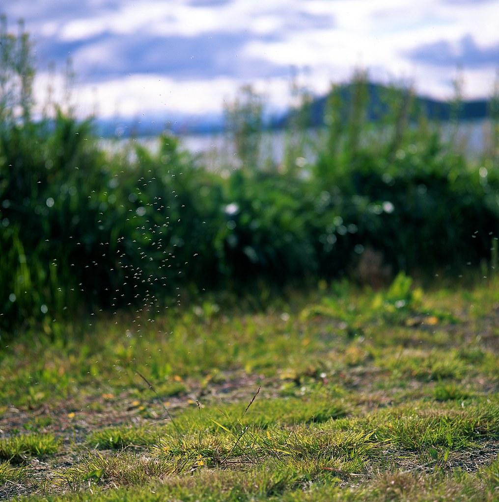 "Image titled ""Swarm, Mývatn, Iceland."""
