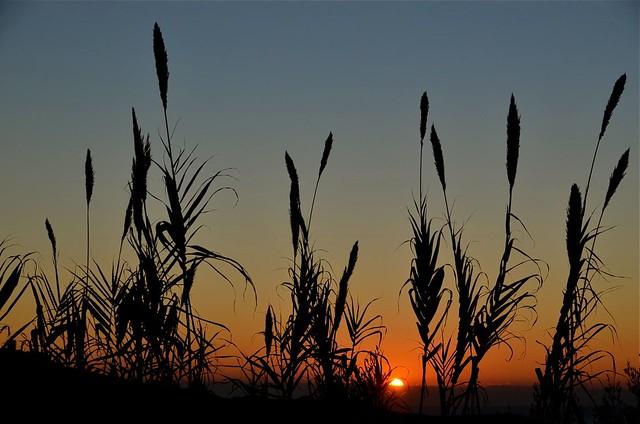 Tuscany / Castagneto Carducci Sunset
