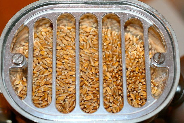 Wheat berries in the grain mill