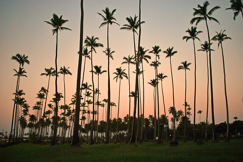 travel trees sunset palms hawaii islands coconut adventure kauai kapaa globetrekking