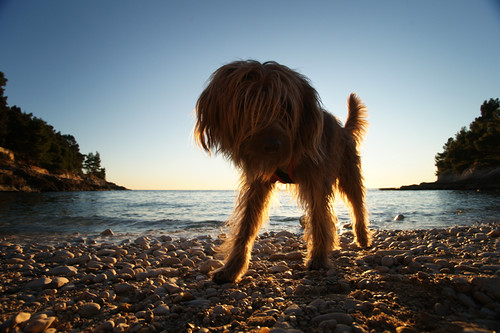 giant dog on the beach by Funny Fish