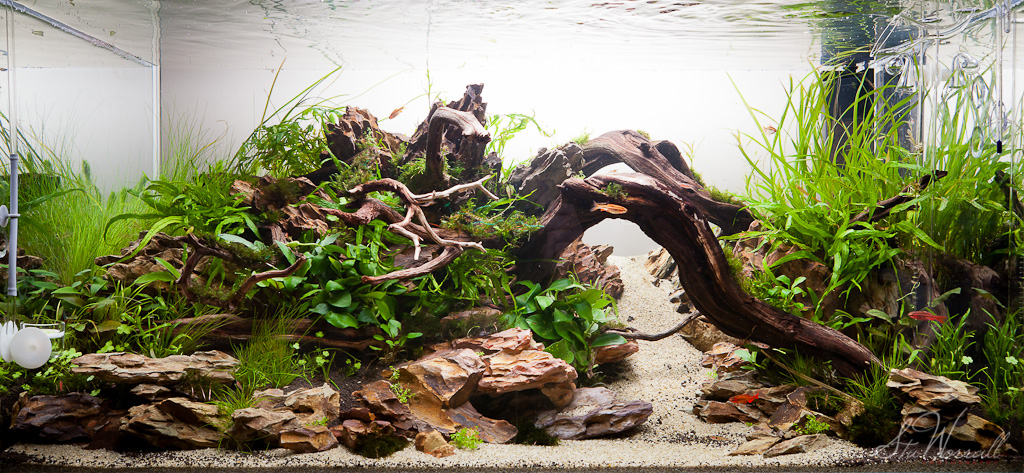 Exceptionnel 90x45x45cm Dragon Stone Scape By Stu Worrall, On Flickr
