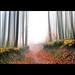 Erdő út, túra útak