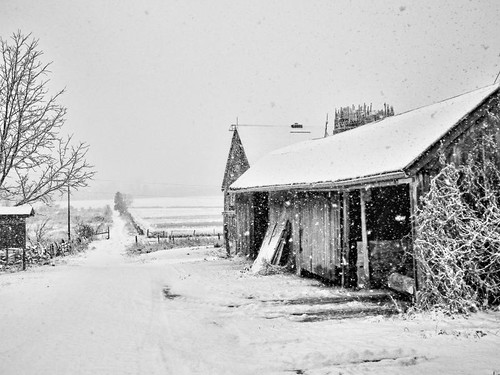Down a snowy lane by Alan Norsworthy
