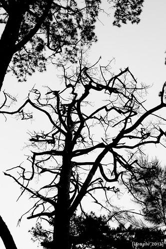 Creepy Tree by israelv